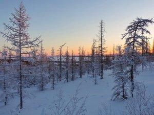 Обаяние зимнего леса