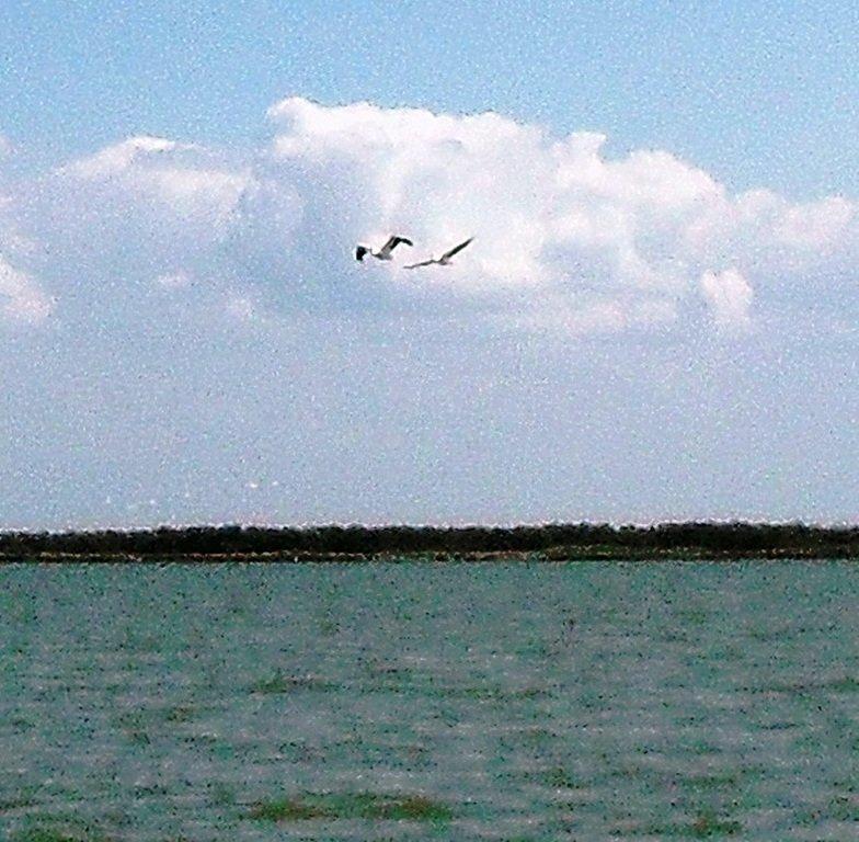 В море, у косы Ачуевской, с птицами, на яхте... 005. 011