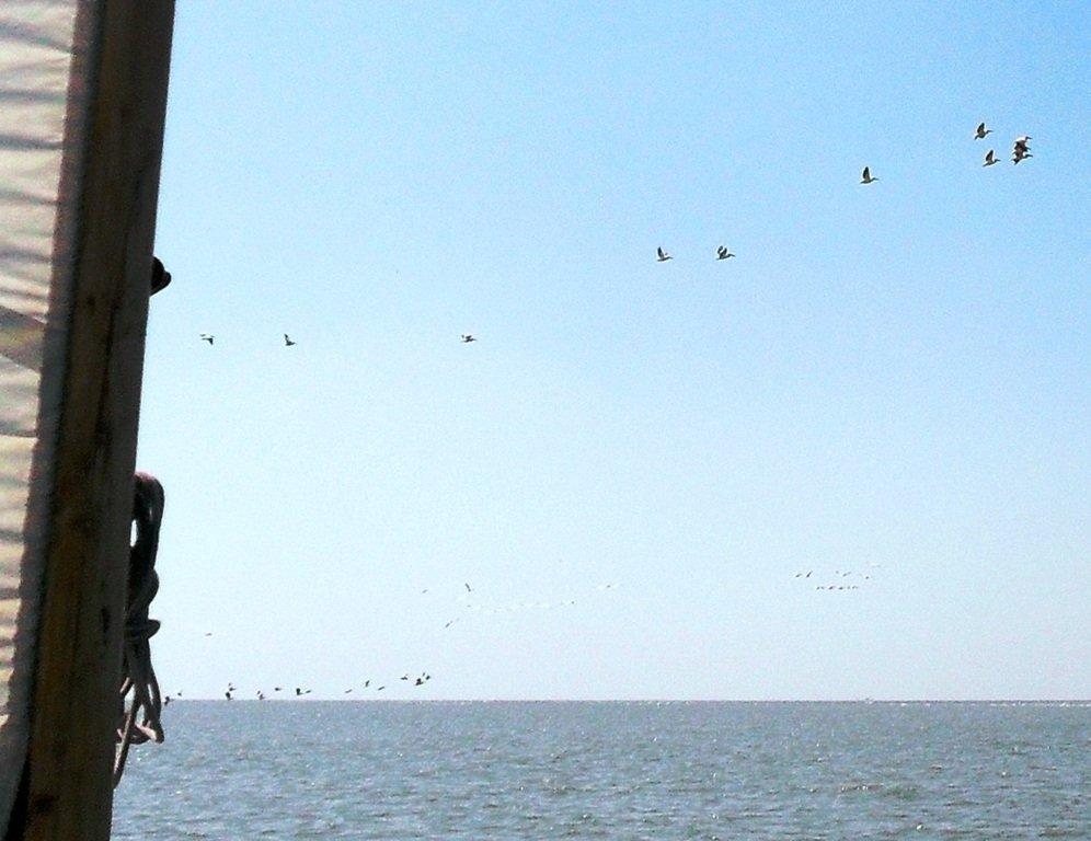 В море, у косы Ачуевской, с птицами, на яхте... 005. 010