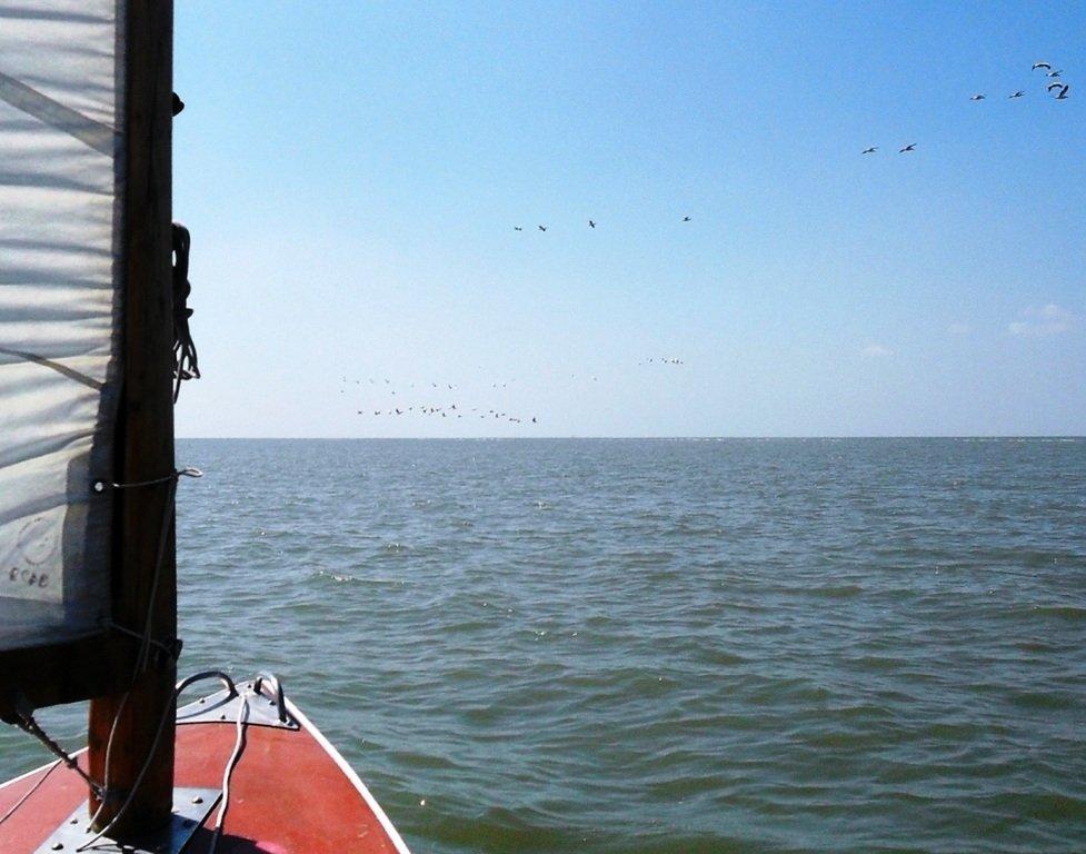 В море, у косы Ачуевской, с птицами, на яхте... 005. 009