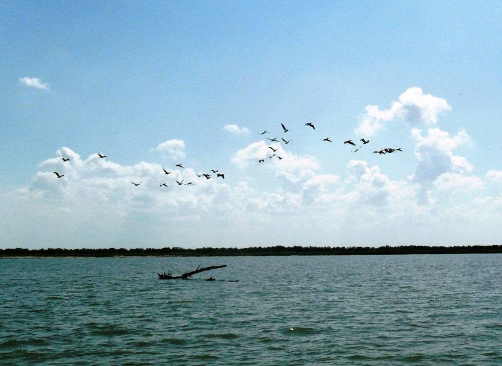 В море, у косы Ачуевской, с птицами, на яхте... 005. 008
