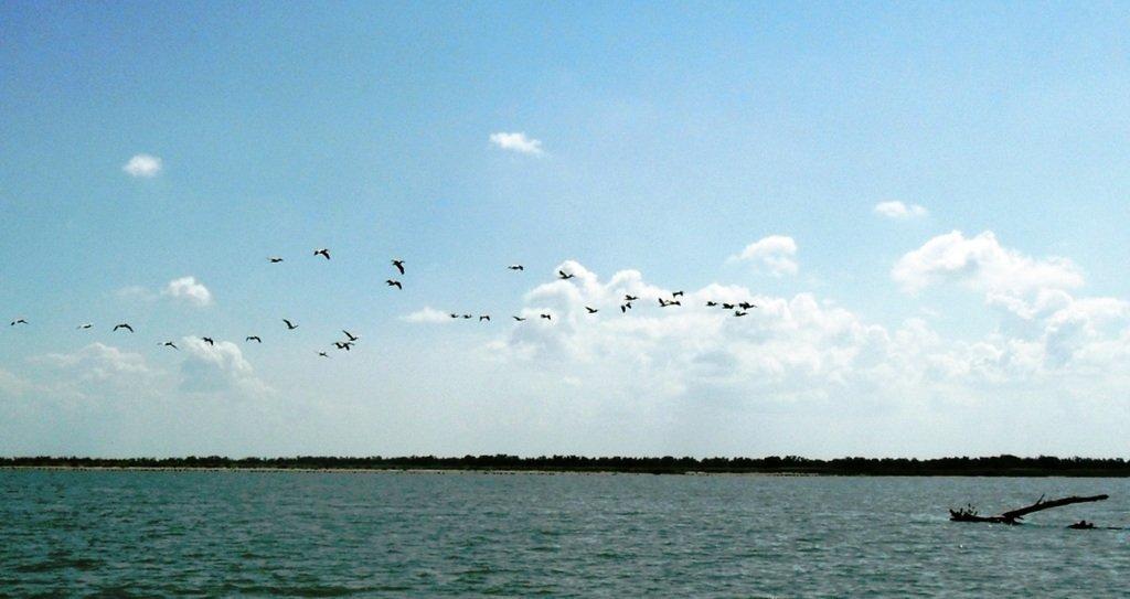В море, у косы Ачуевской, с птицами, на яхте... 005. 007