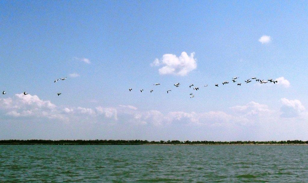 В море, у косы Ачуевской, с птицами, на яхте... 005. 006
