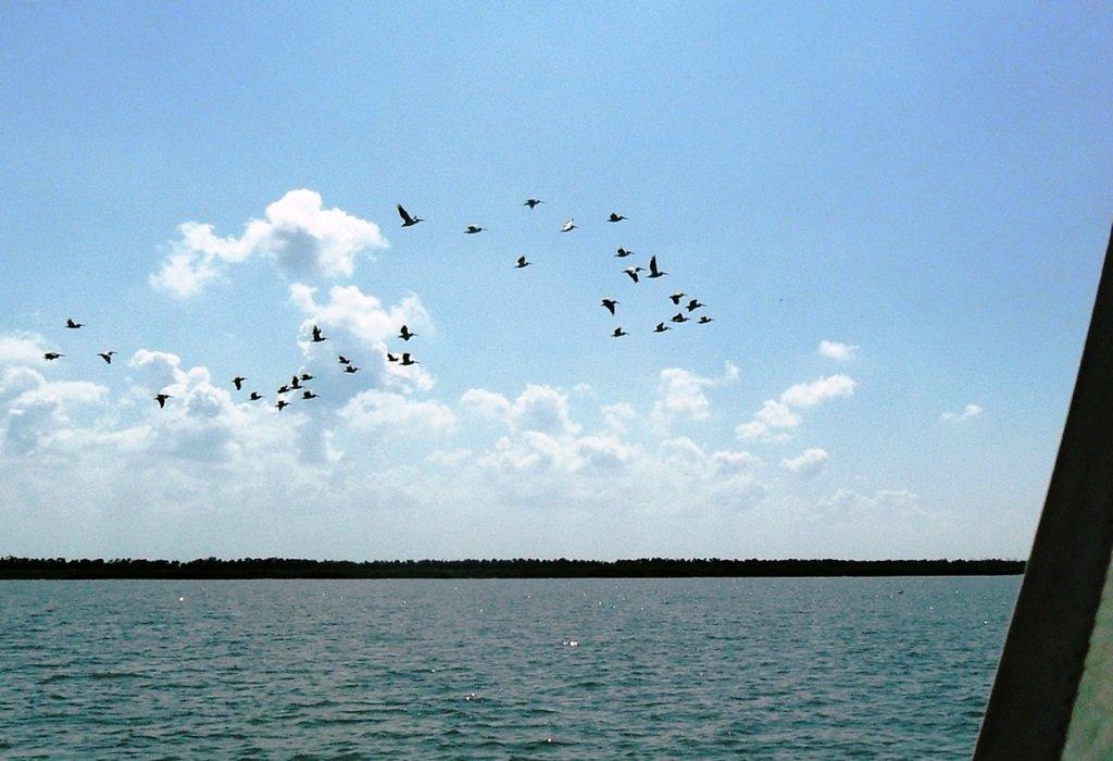 В море, у косы Ачуевской, с птицами, на яхте... 005. 005