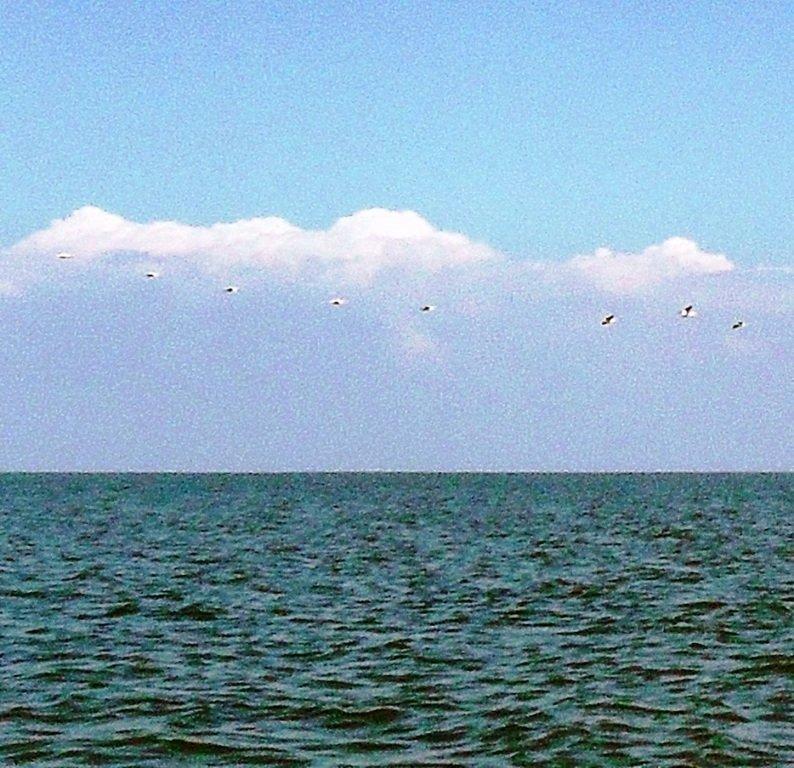 В море, у косы Ачуевской, с птицами, на яхте... 005. 004