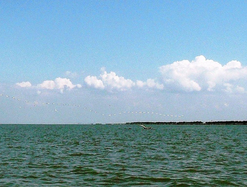 В море, у косы Ачуевской, с птицами, на яхте... 005. 003