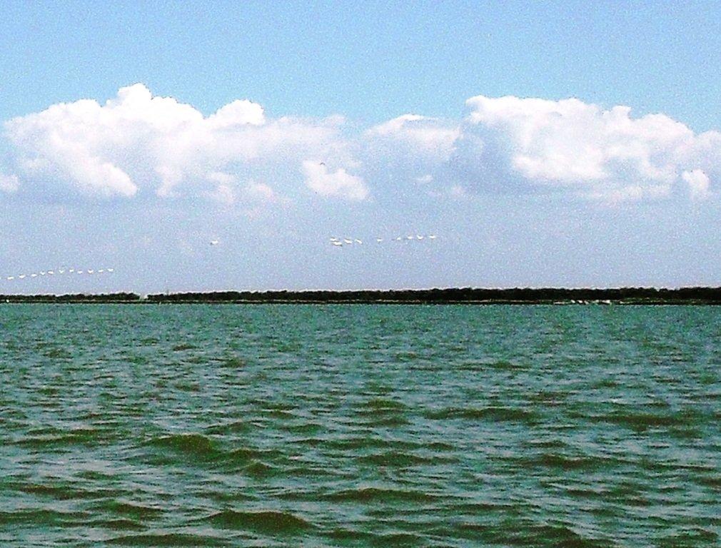 В море, у косы Ачуевской, с птицами, на яхте... 005. 002
