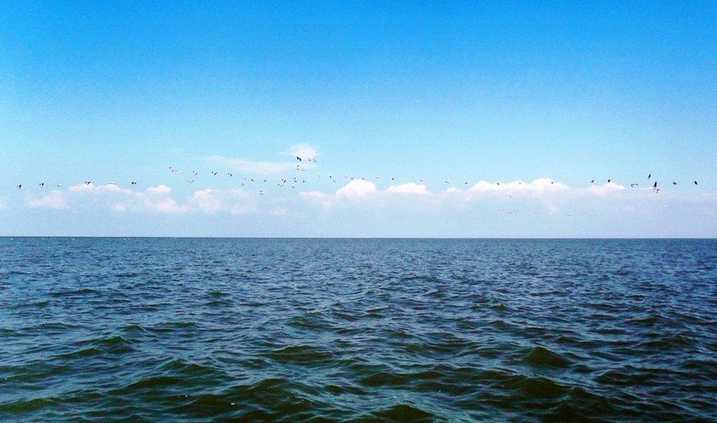 В море, у косы Ачуевской, с птицами, на яхте... 005. 001...