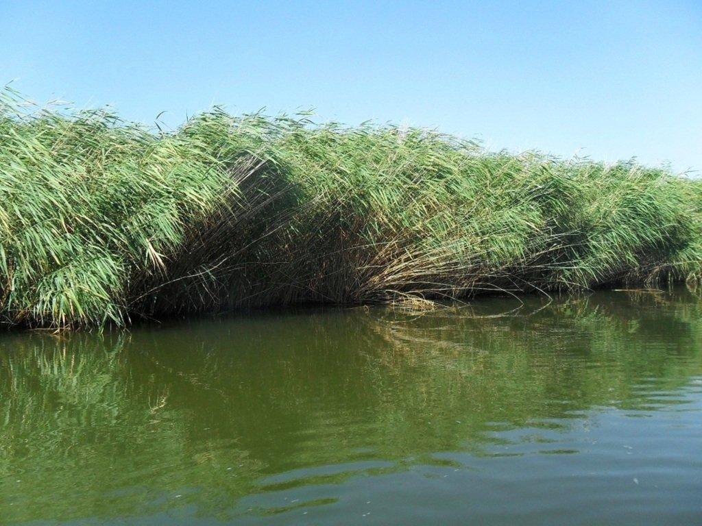 На яхте, с парусом, средь камышей, в каналах, Ачуевская коса... 011. 006