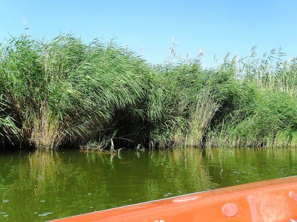 На яхте, с парусом, средь камышей, в каналах, Ачуевская коса... 011. 003