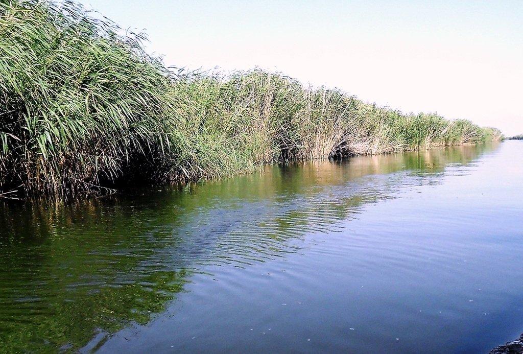 На яхте, с парусом, средь камышей, в каналах, Ачуевская коса... 011. 002
