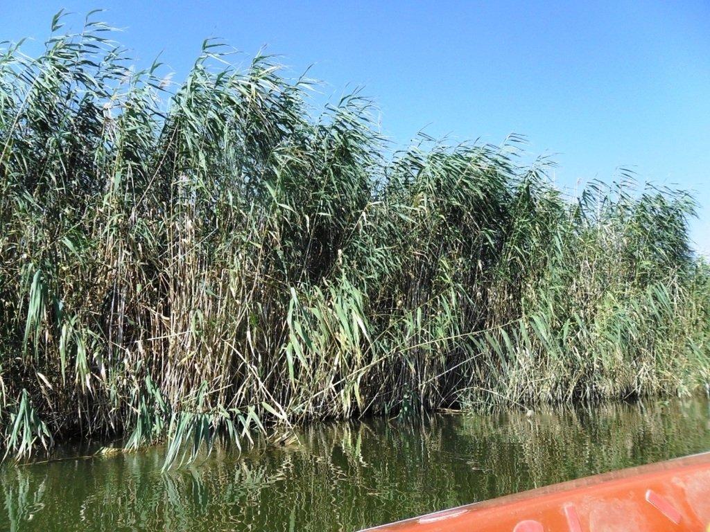 На яхте, с парусом, средь камышей, в каналах, Ачуевская коса... 011. 001