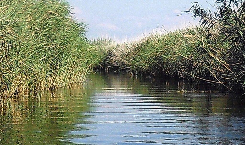 На косе Ачуевской, в каналах и лиманах, с парусом, август... 012. 001