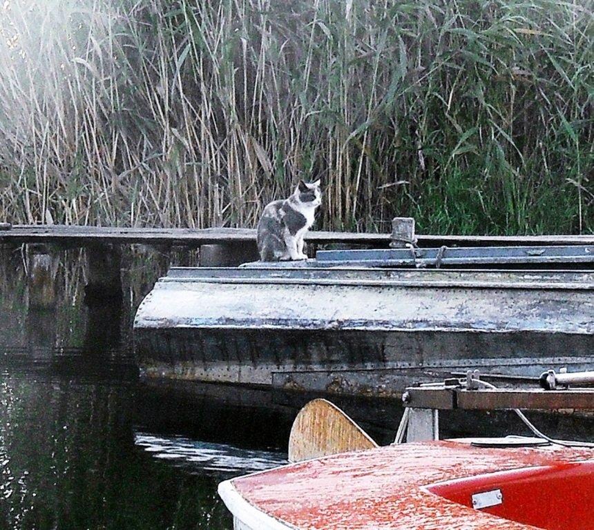 Утро, в походе яхтенном, Ачуевская коса, на водных дорогах... 015. 008
