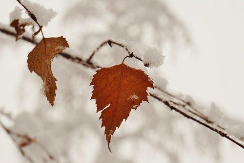 Листики и снег