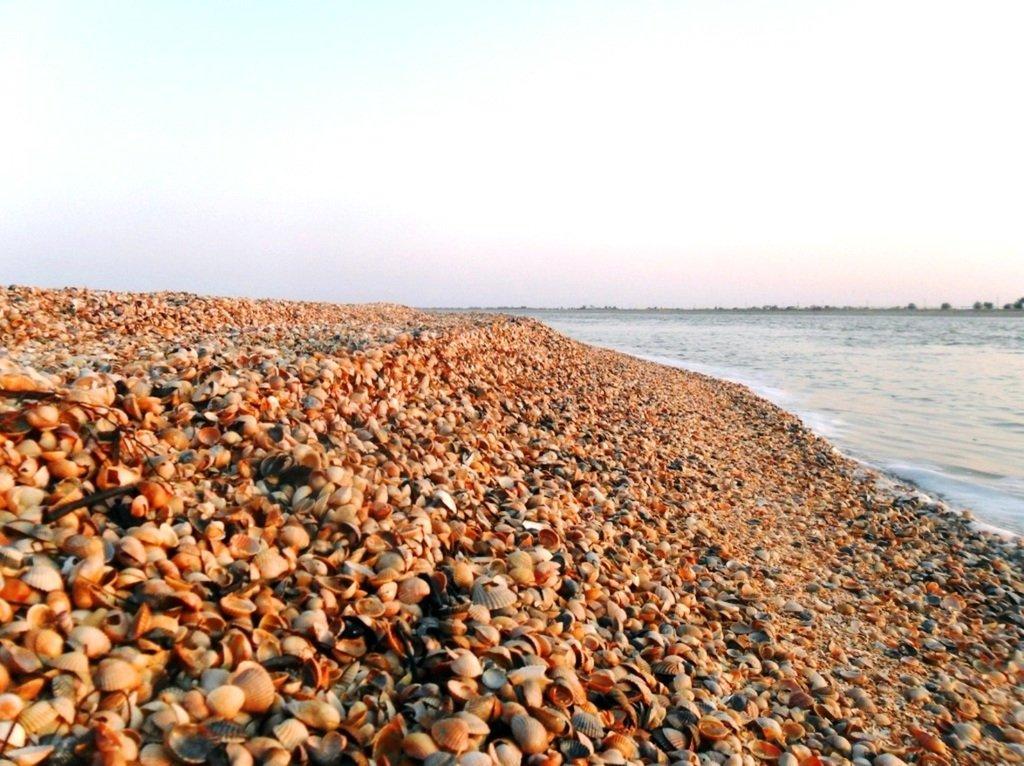 На Природе, утро, у моря, август, на Ясенской косе... 028. 002