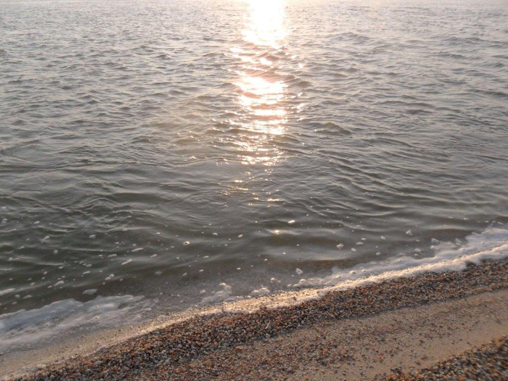 На Природе, утро, у моря, август, на Ясенской косе... 028. 004