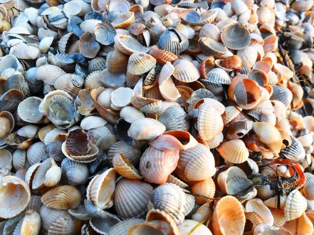 На Природе, утро, у моря, август, на Ясенской косе... 028. 003