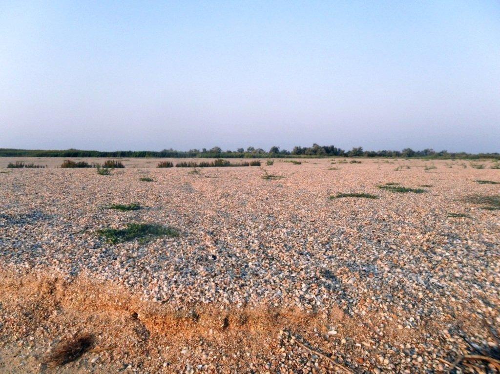 На Природе, утро, у моря, август, на Ясенской косе... 028. 008