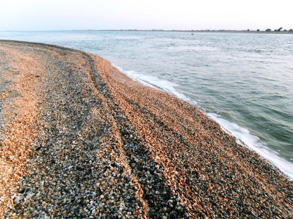 На Природе, утро, у моря, август, на Ясенской косе... 028. 001
