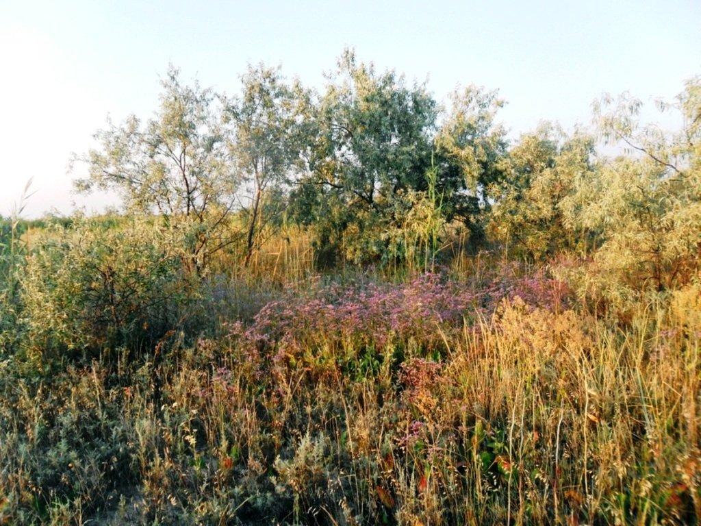 На Природе, утро, у моря, август, на Ясенской косе... 028. 012