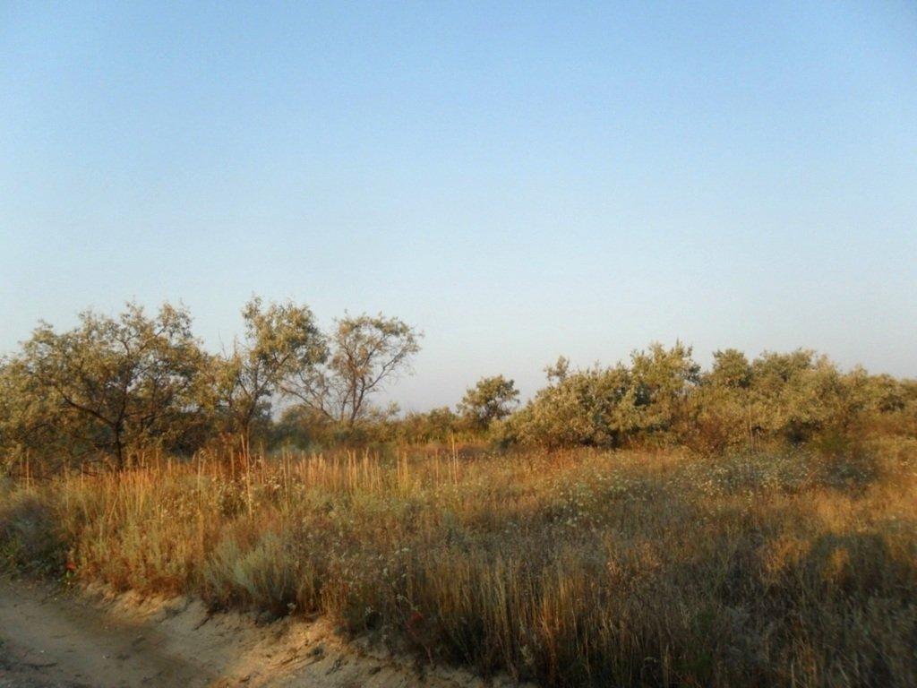 На Природе, Азовское побережье, август, в походе... 029. 005