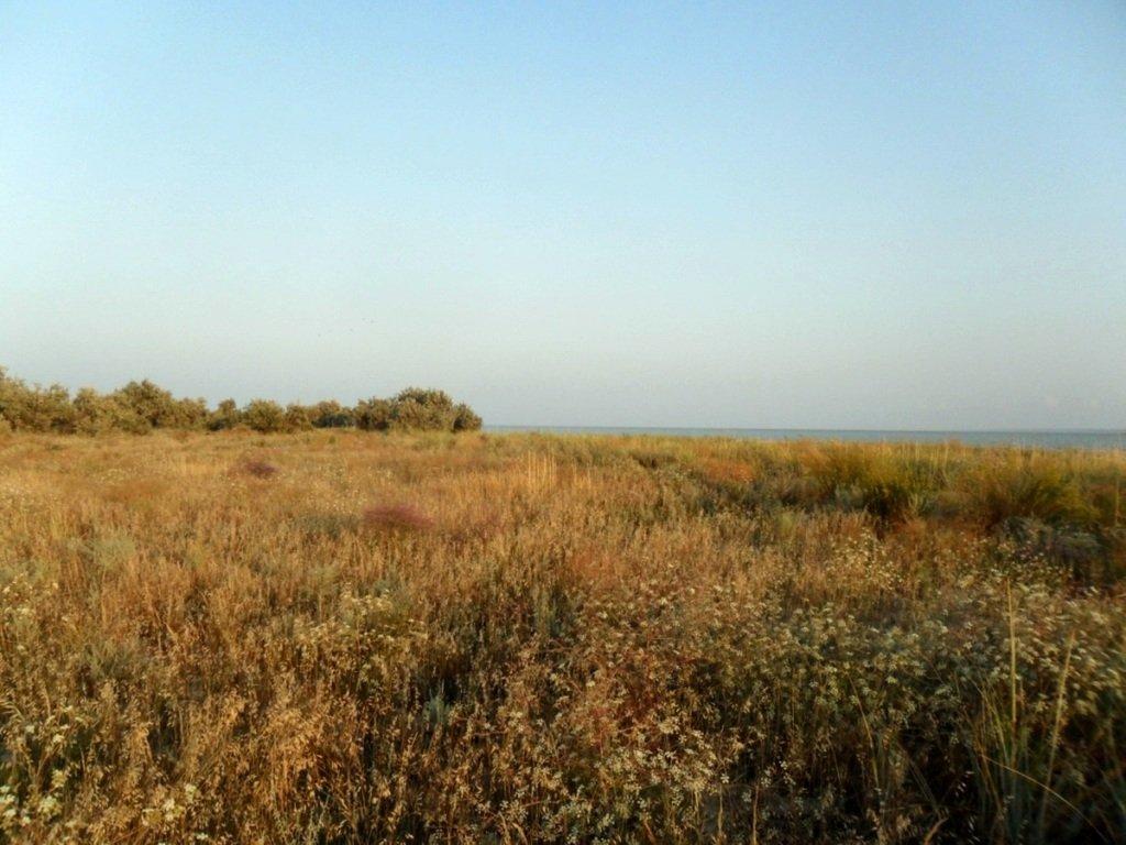 На Природе, Азовское побережье, август, в походе... 029. 003