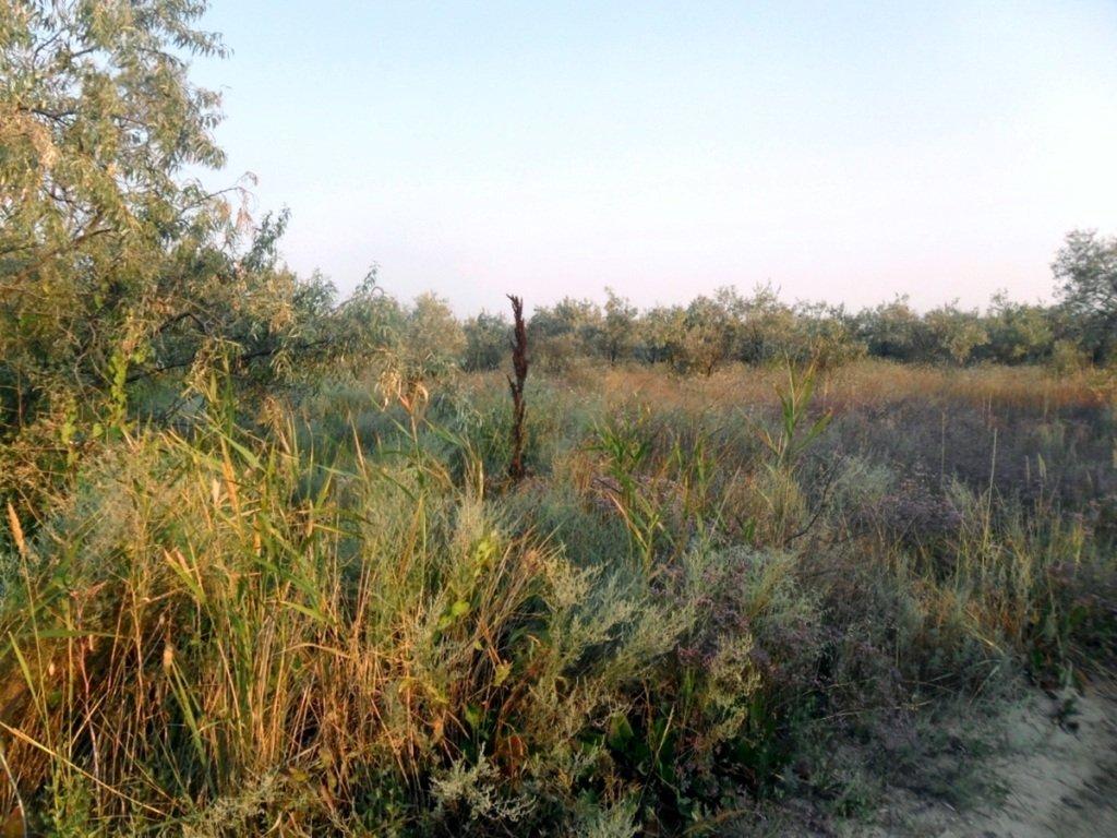 На Природе, Азовское побережье, август, в походе... 029. 006