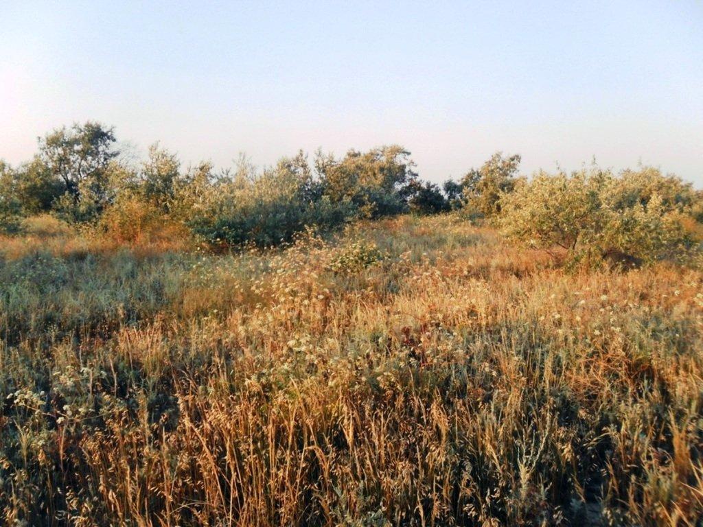 На Природе, Азовское побережье, август, в походе... 029. 002