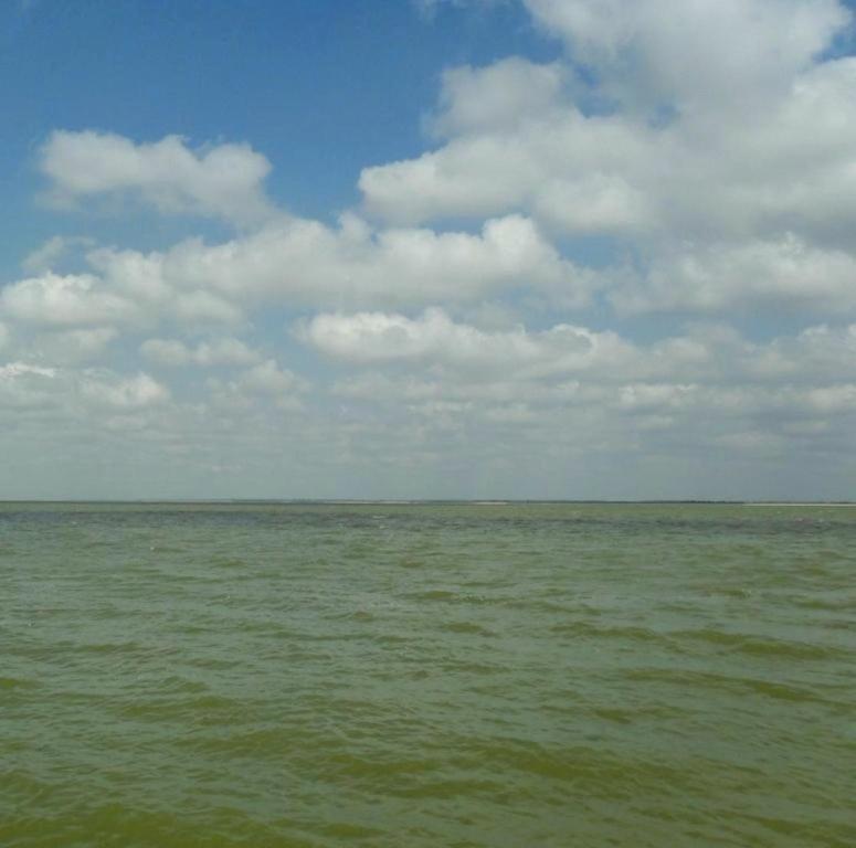 У моря, Азовское побережье, на севере Ясенской косы, август... 032. 012