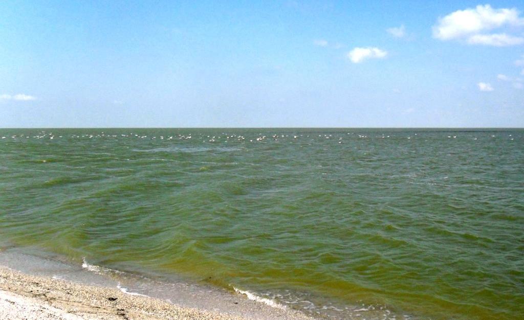 У моря, Азовское побережье, на севере Ясенской косы, август ... 032. 003