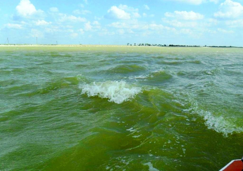 На морском просторе, солнечный день, у Азовских берегов, в августе... 035. 010