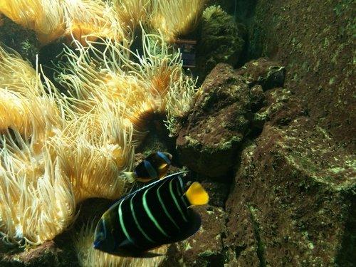 Подводные поляны