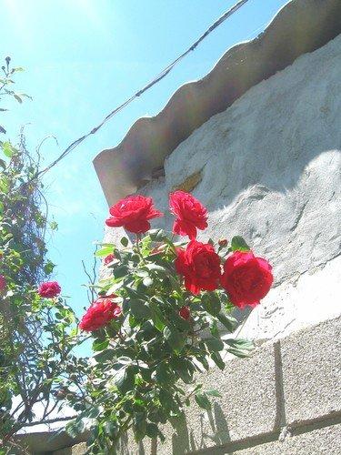 На фоне стены.