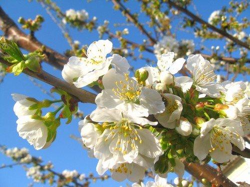 Придет весна!