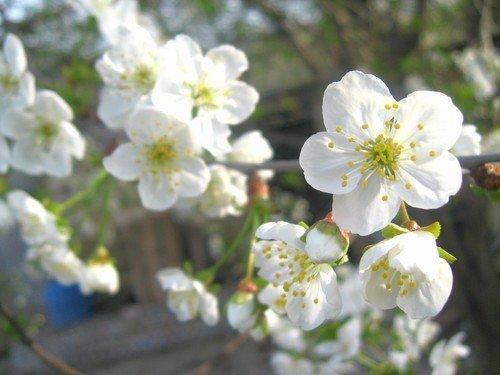 Скоро весна в Крыму.