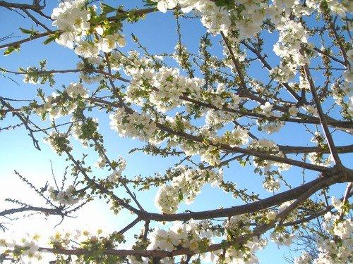 Небо весны.