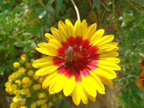 Октябрьская пчелка.