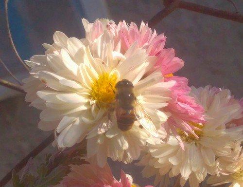 С пчелкой.