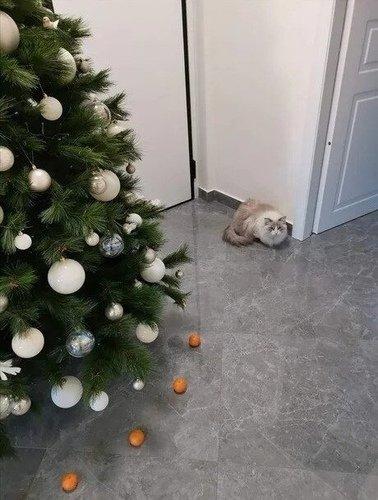 Как спасти ёлку от кота?)