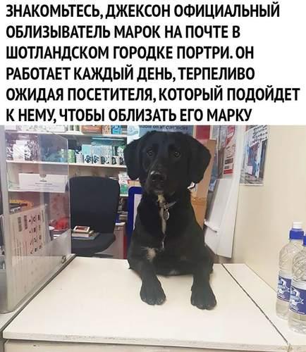 Работяга)