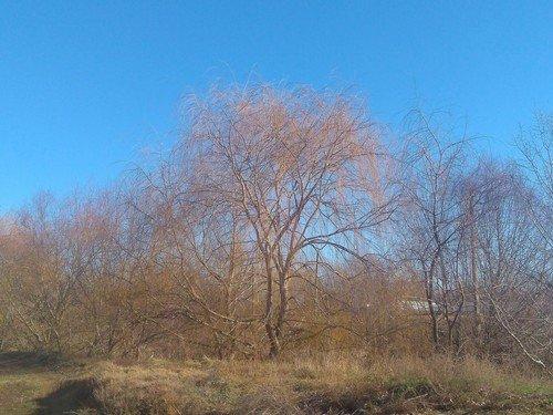 Весна в январе.