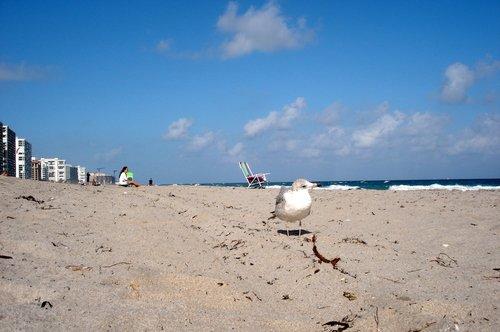 Дирфилд-Бич. На пляже зимой.