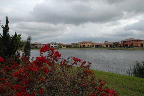 Флорида. Цветочный куст и камыши у пруда.