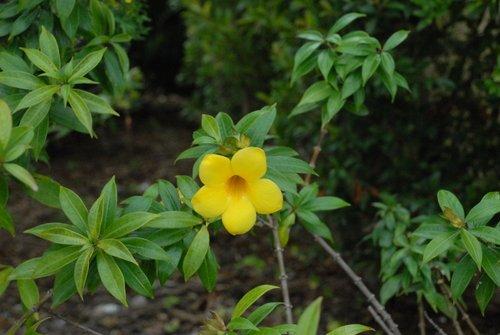 Декабрьский цветок Флориды