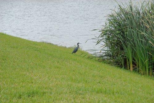 Бывает, что и птицы смотрят с берега в даль...