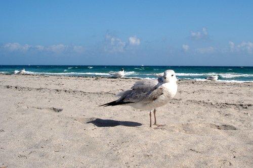 На пляжах Флориды в декабре