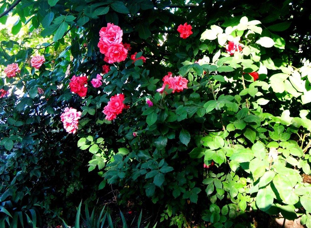 DSC06459 У цветов, в мае... .JPG