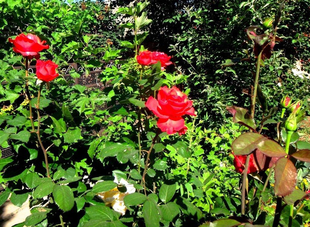 DSC06458 У цветов, в мае... .JPG