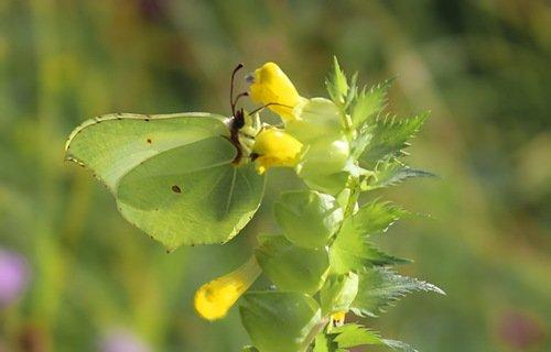 июльский этюд с бабочкой